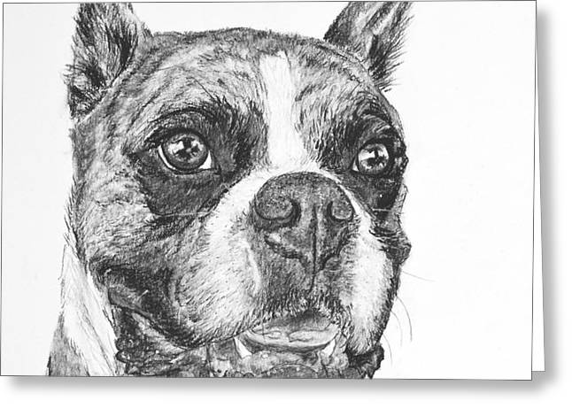 Boxer Dog Sketch Greeting Card by Kate Sumners