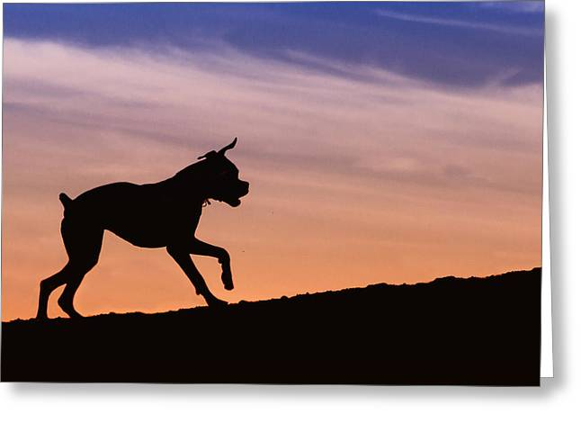 Boxer Greeting Cards - Boxer Dog Sunset Silhouette Greeting Card by Stephanie McDowell