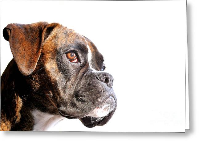 Boxer Greeting Cards - Boxer Greeting Card by Jana Behr