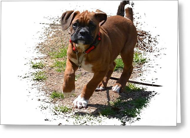 Boxer Puppy 14-1 Greeting Card by Maria Urso