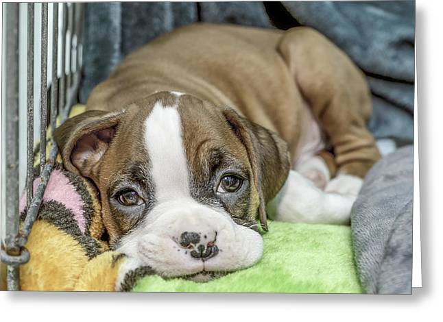 Boxer Puppy Among Toys Greeting Card by Tony Moran