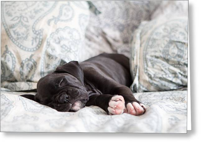 Boxer Dog Art Print Greeting Cards - Boxer Puppy Sleeping Greeting Card by Stephanie McDowell