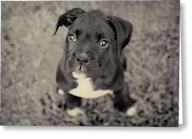 Boxer Dog Art Print Greeting Cards - Boxer Puppy Greeting Card by Stephanie McDowell