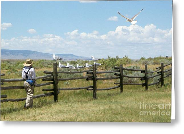 Childhood Greeting Cards - Boy and Seagulls Greeting Card by Cindy Singleton