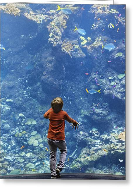 Blue Green Water Greeting Cards - Boy at aquarium Greeting Card by Michael Evans