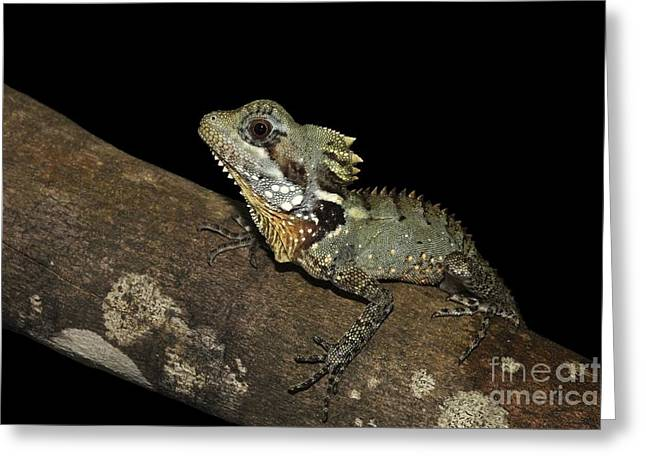 Forest At Night Greeting Cards - Boyds Forest Dragon Greeting Card by Gerry Pearce