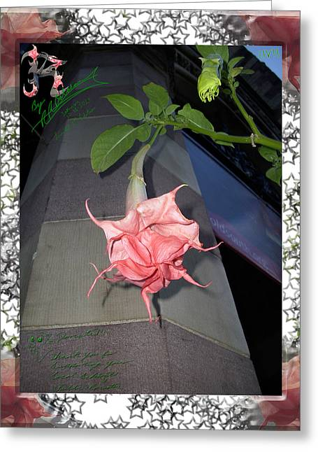 Local Mixed Media Greeting Cards - Boylston Flower Greeting Card by R R  Balasar