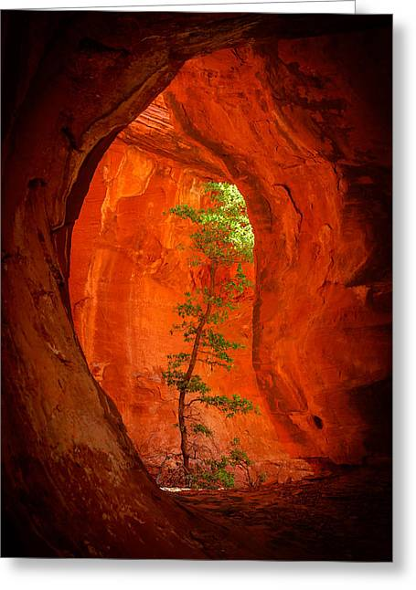 Warm Landscape Greeting Cards - Boynton Canyon 04-343 Greeting Card by Scott McAllister