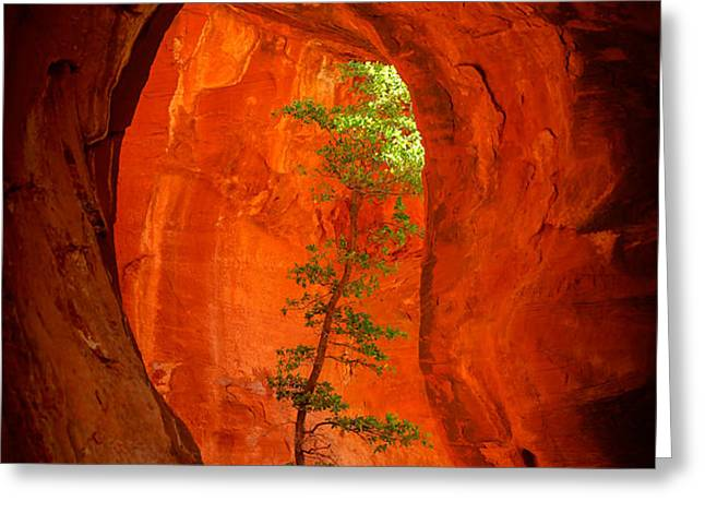 Boynton Canyon 04-343 Greeting Card by Scott McAllister