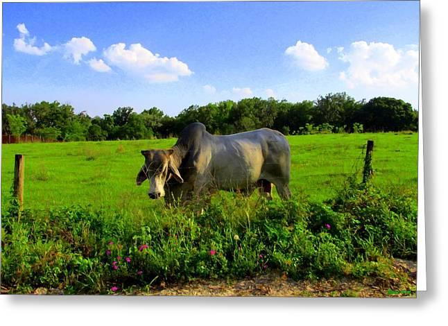 Brahma Bull Greeting Cards - Brahma Bull II Greeting Card by Buzz Coe