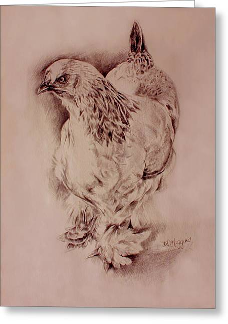 Fluffy Chickens Greeting Cards - Brahma Hen Greeting Card by Derrick Higgins