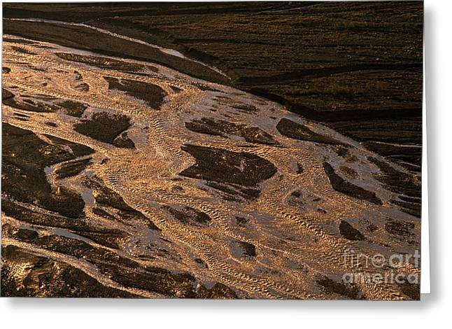 Streambed Greeting Cards - Braided River, Denali National Park Greeting Card by Ron Sanford