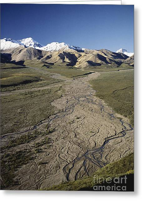 1987 Greeting Cards - Braided River In Alaska Greeting Card by William H. Mullins