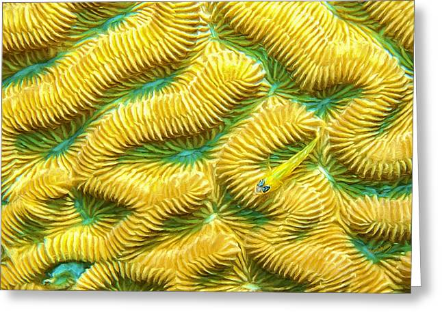 Brain Coral Greeting Cards - Brain Coral and Goby Greeting Card by David Wagner