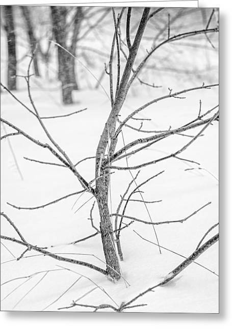 Drifting Snow Greeting Cards - Branch in Snow  Greeting Card by Chris Tobias