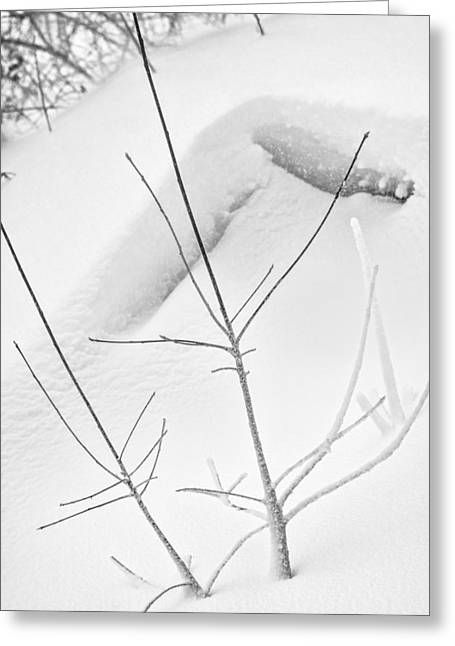 Drifting Snow Greeting Cards - Branch in Snow Drift Greeting Card by Chris Tobias