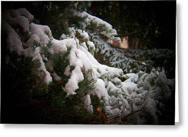 Snow Scenes Greeting Cards - Branch in Snow Greeting Card by Joyce Kimble Smith
