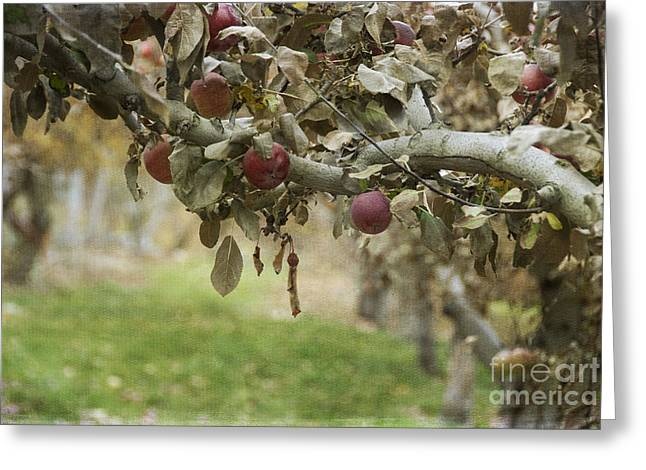 Apple Orchards Greeting Cards - Branch of an Apple Tree Greeting Card by Juli Scalzi