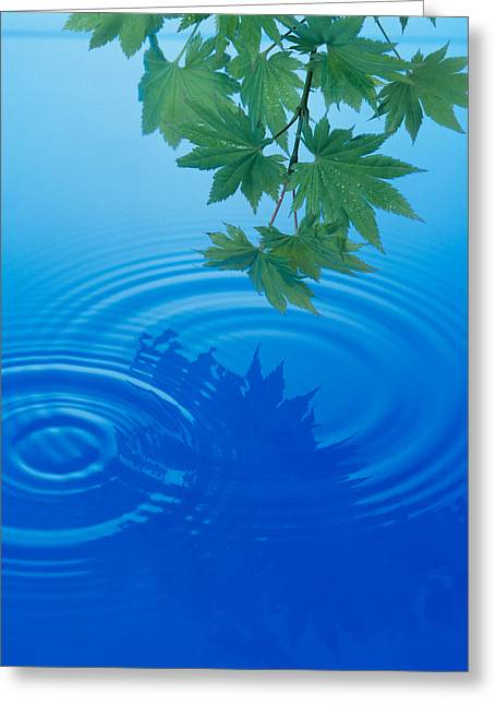 Green Leafs Greeting Cards - Branch With Green Leaves Suspended Greeting Card by Panoramic Images