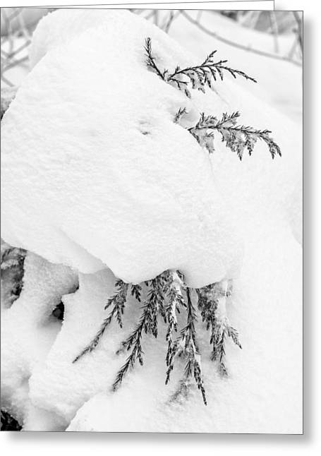 Drifting Snow Greeting Cards - Branch Wrapped in Snow Greeting Card by Chris Tobias