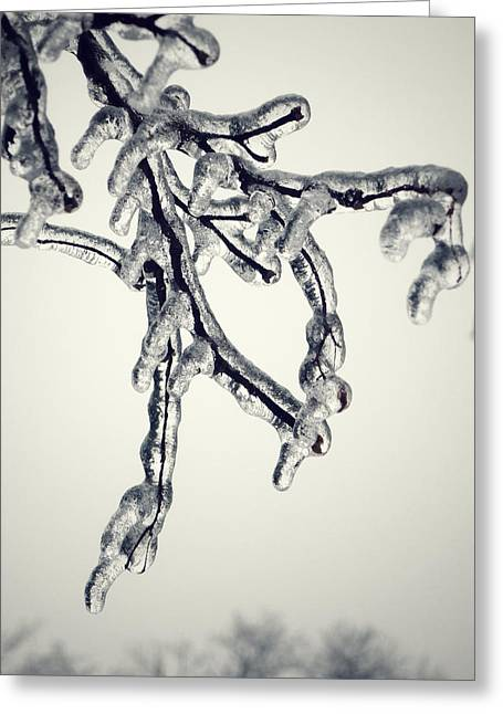 Bare Trees Digital Greeting Cards - Branche de Glacon Greeting Card by Natasha Marco