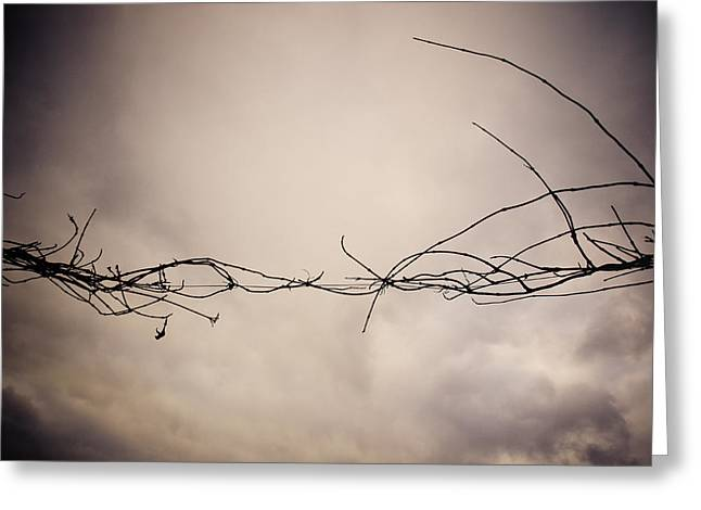 Clouds. Emotional Greeting Cards - Branches Against a Winter Sky Greeting Card by Vivienne Gucwa