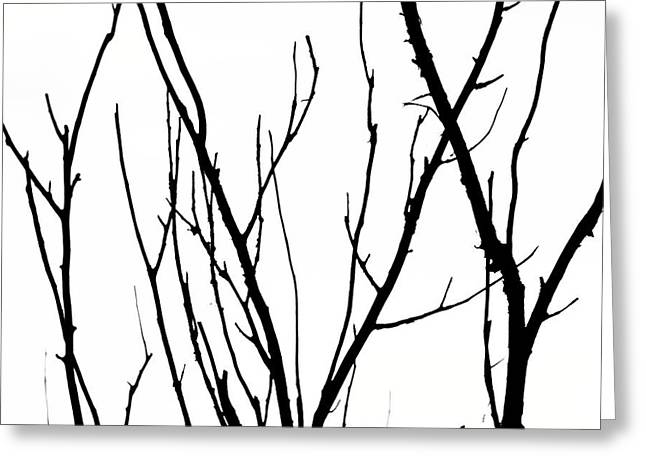 Branches Greeting Card by Aidan Moran