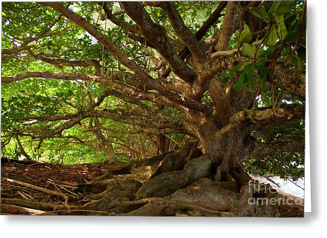 Banyan Tree Greeting Cards - Branches And Roots Greeting Card by James Eddy