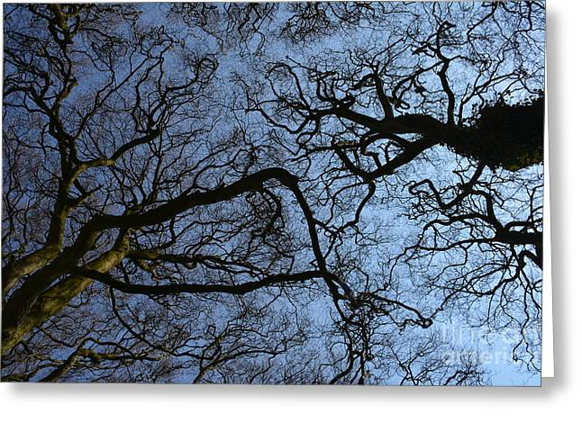 Roadway Greeting Cards - Branches in the Sky Greeting Card by Edna Weber