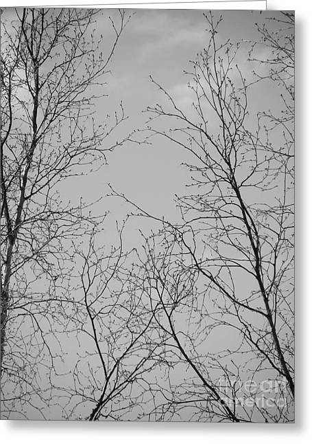Jennifer Kimberly Greeting Cards - Branches Greeting Card by Jennifer Kimberly