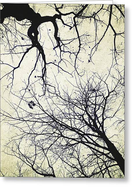 Bare Trees Digital Greeting Cards - Branches Greeting Card by Natasha Marco