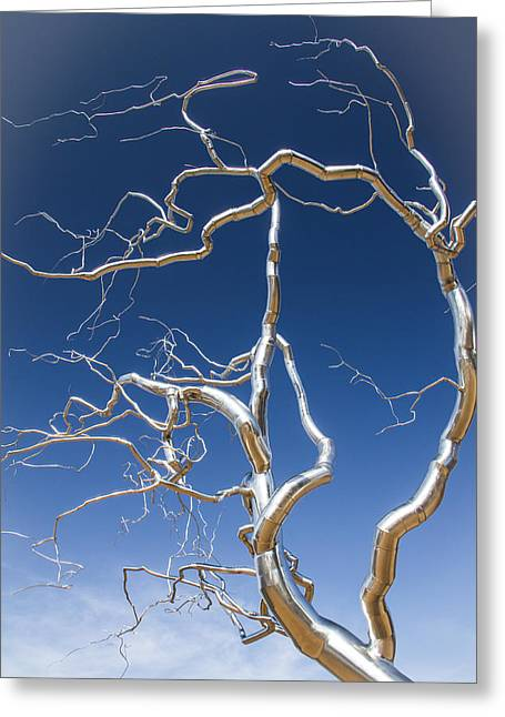 Arkansas Greeting Cards - Branches of Silver Greeting Card by Steven Bateson