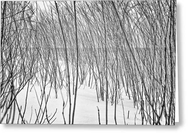Drifting Snow Greeting Cards - Branches on a Beach in a Snow Storm Greeting Card by Chris Tobias