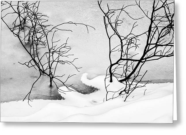 Petrifying Springs Greeting Cards - Branches Through the River Ice Greeting Card by Chris Tobias
