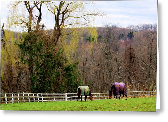 Gnarly Greeting Cards - Branches Watch Over Grazing Horses Greeting Card by Aurelio Zucco