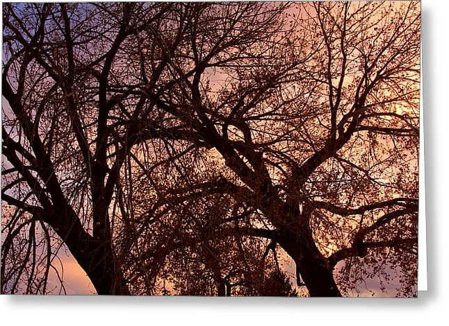 Branching Out at Sunset Greeting Card by James BO  Insogna
