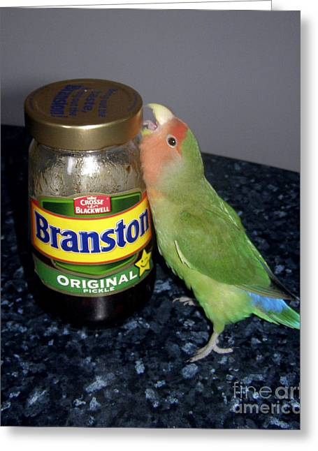 Rosy-faced Lovebird Greeting Cards - Branston Pickle Greeting Card by Terri  Waters