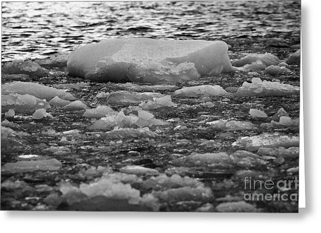 Closing Greeting Cards - brash sea ice forming on the edge of open water winter closing in Antarctica Greeting Card by Joe Fox