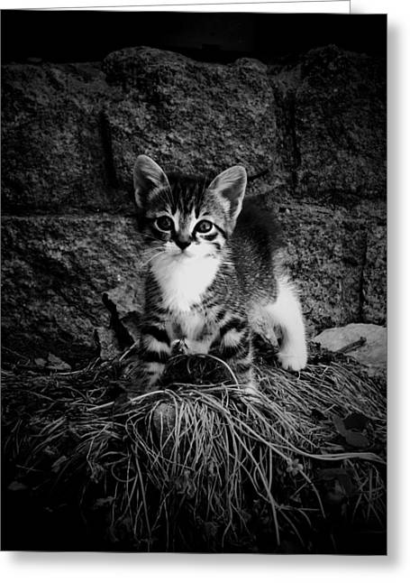 Animals Love Greeting Cards - Brave kitten Greeting Card by Donatella Muggianu