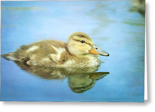 Ducklings Greeting Cards - Braveheart Greeting Card by Fraida Gutovich
