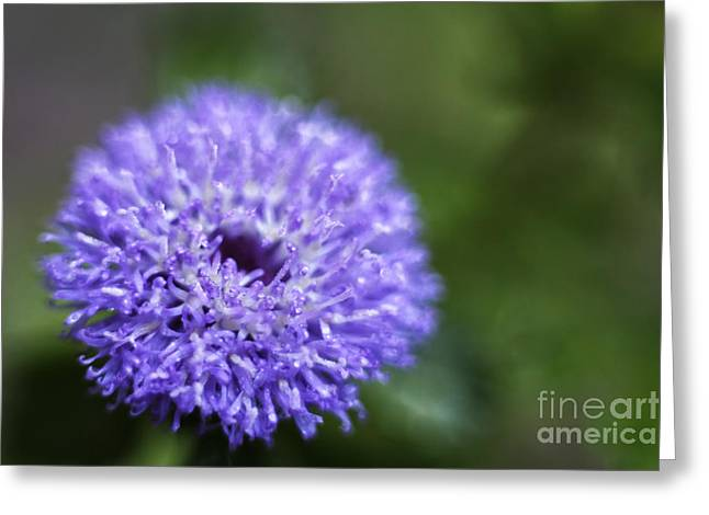 Close Focus Nature Scene Greeting Cards - Brazilian Blue Button Greeting Card by Wendy Townrow