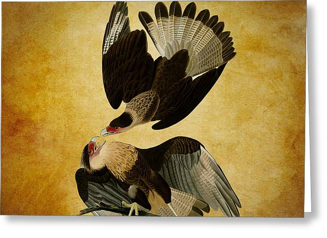 Brazilian Eagle Greeting Card by Sheila Savage