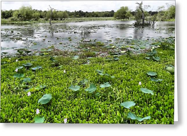 Texas Parks Greeting Cards - Brazos Bend State Park Greeting Card by Dan Sproul
