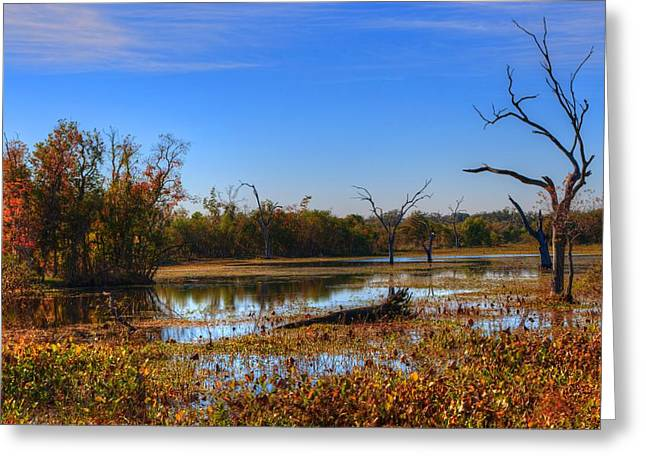 Sky Greeting Cards - Brazos Bend Swamp Greeting Card by David Morefield