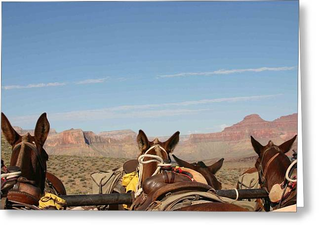 break time Greeting Card by Janis Tremper