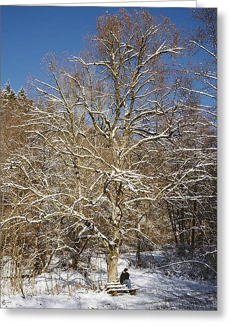 Winterly Forest Greeting Cards - Break under a large tree - sunny winter day Greeting Card by Matthias Hauser