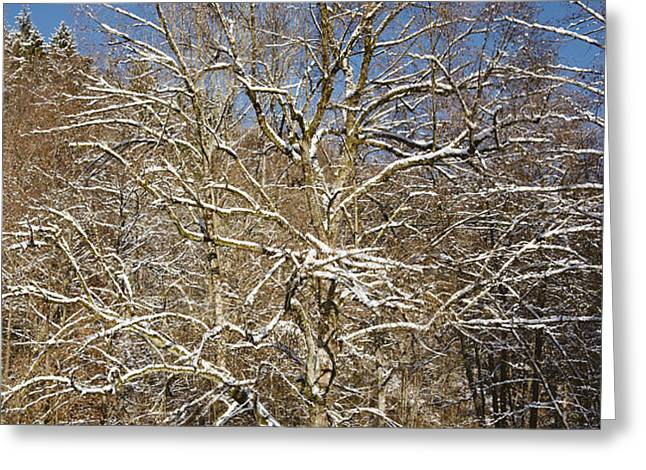 Break under a large tree - sunny winter day Greeting Card by Matthias Hauser