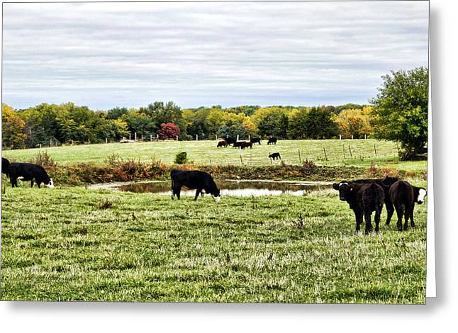 Mo Ranch Greeting Cards - Breakfast Interrupted Greeting Card by Cricket Hackmann