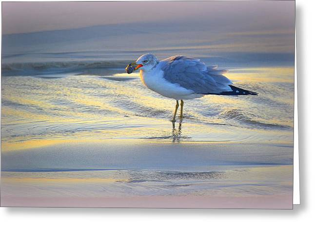 Faa Featured Greeting Cards - Breakfast on the Beach #2 Greeting Card by Toni Abdnour