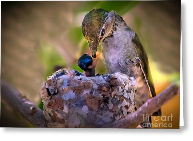 Trochilidae Greeting Cards - Breakfast Greeting Card by Robert Bales